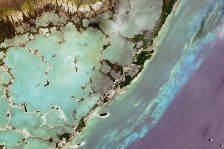 Key West coral reef