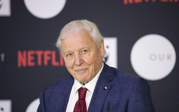 Netflix Poached David Attenborough - InsideHook