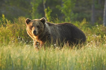 Some Epic Human Just Fought Off a Bear With a Wine Bottle
