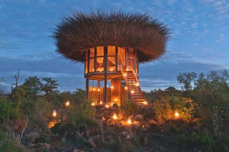 Five-Star Bird Nest Now Accepting Safari Enthusiasts