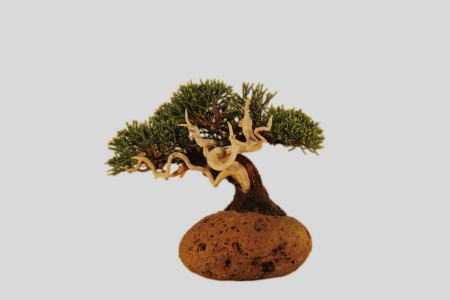 Don't Panic. It's Just a Floating Bonsai.