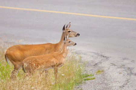 Would You Pay $75 for America's Fanciest Roadkill Dinner?