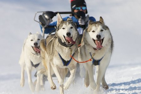 Here's Your Chance to Race in the Iditarod. Literally.