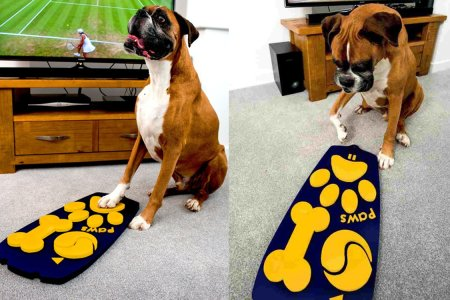 Someone Just Invented a TV Remote for Dogs