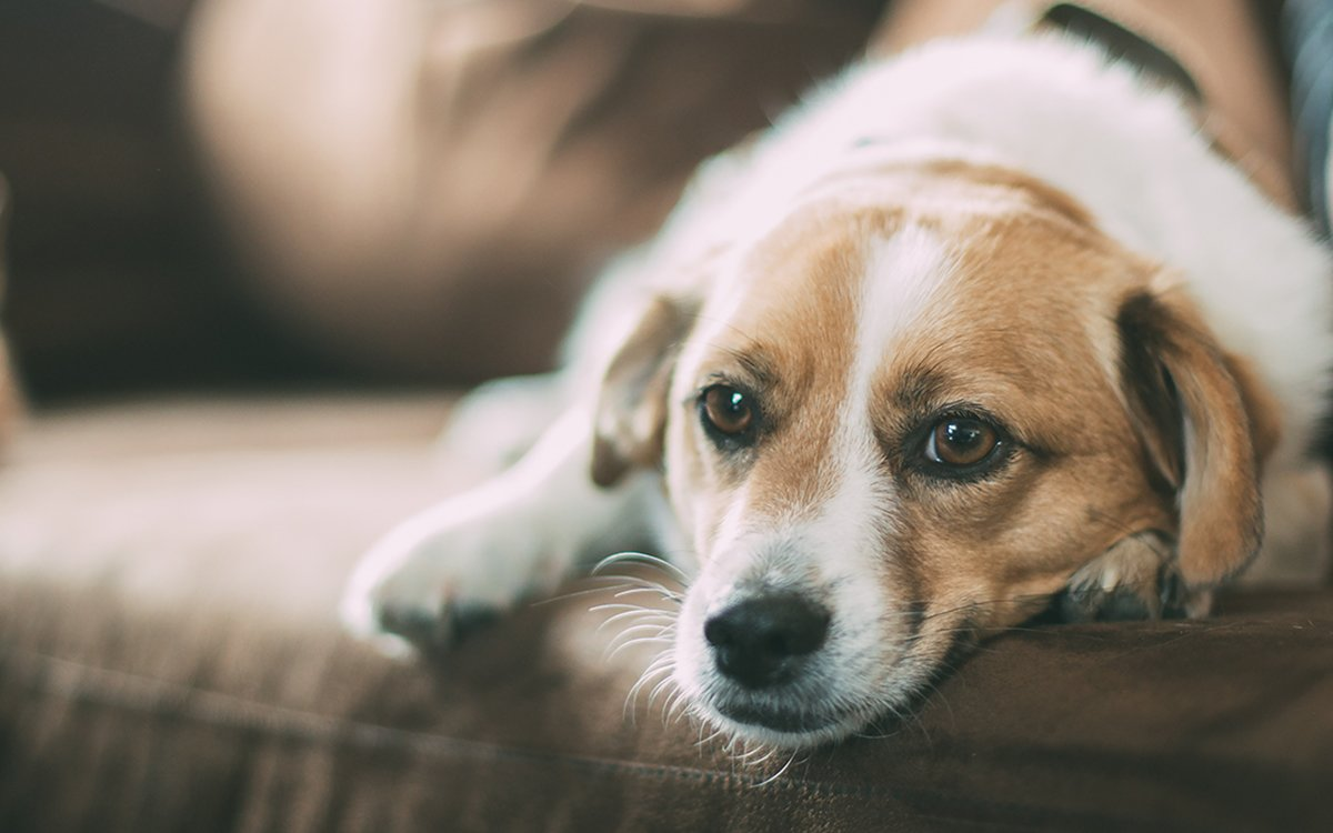 Your Dog Lies to Get Extra Food, Confirms Year's Least Necessary Study