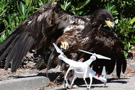 Dutch Cops Are Now Using Eagles to Hunt Rogue Drones