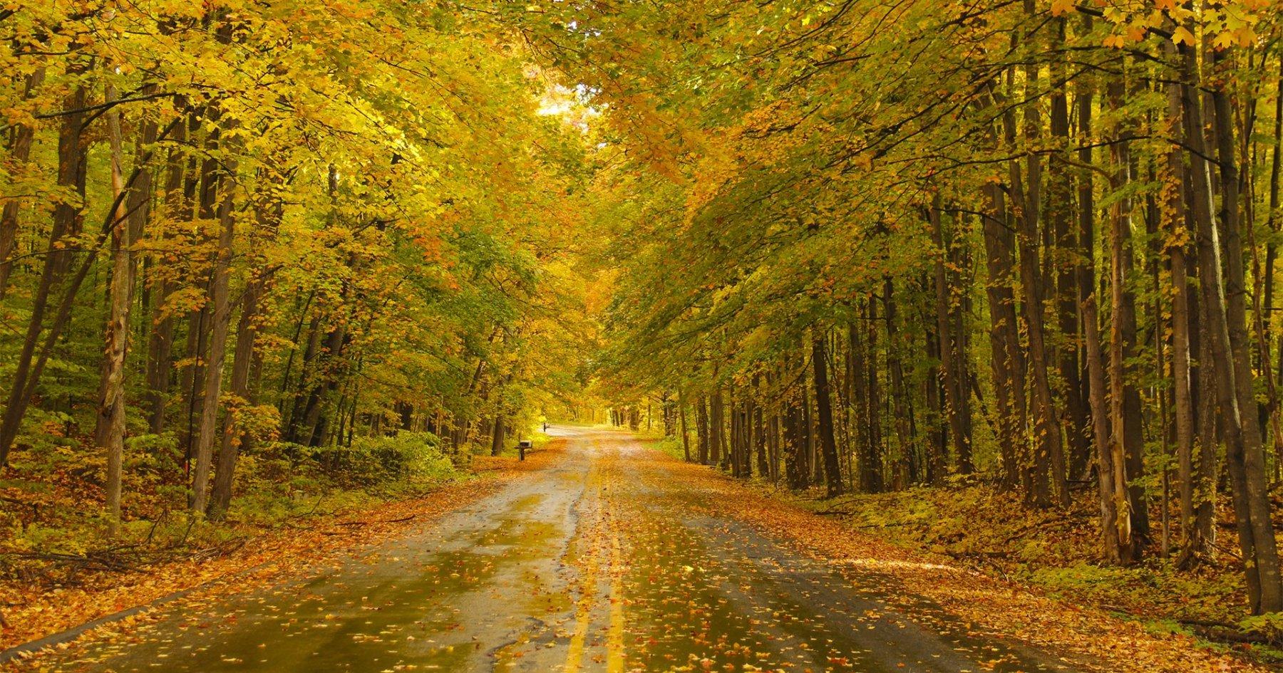 This Fall Drive. That Michigan Farmhouse.