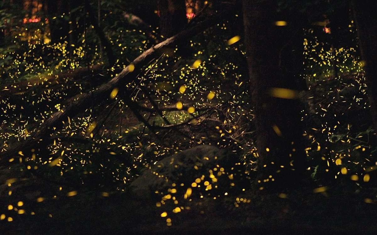 The Smokies' Annual Firefly Bonanza Is … Kinda Life-Changing, to Be Honest