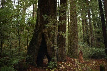 Help Plant 1 Million Redwood Trees Without Lifting a Finger