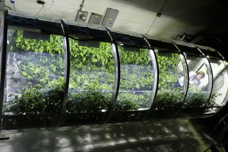 NASA Is Building Inflatable Greenhouses So Your Vegan Friend Won't Die in Space