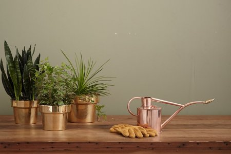 The Layman's Guide to Becoming a Houseplant Person