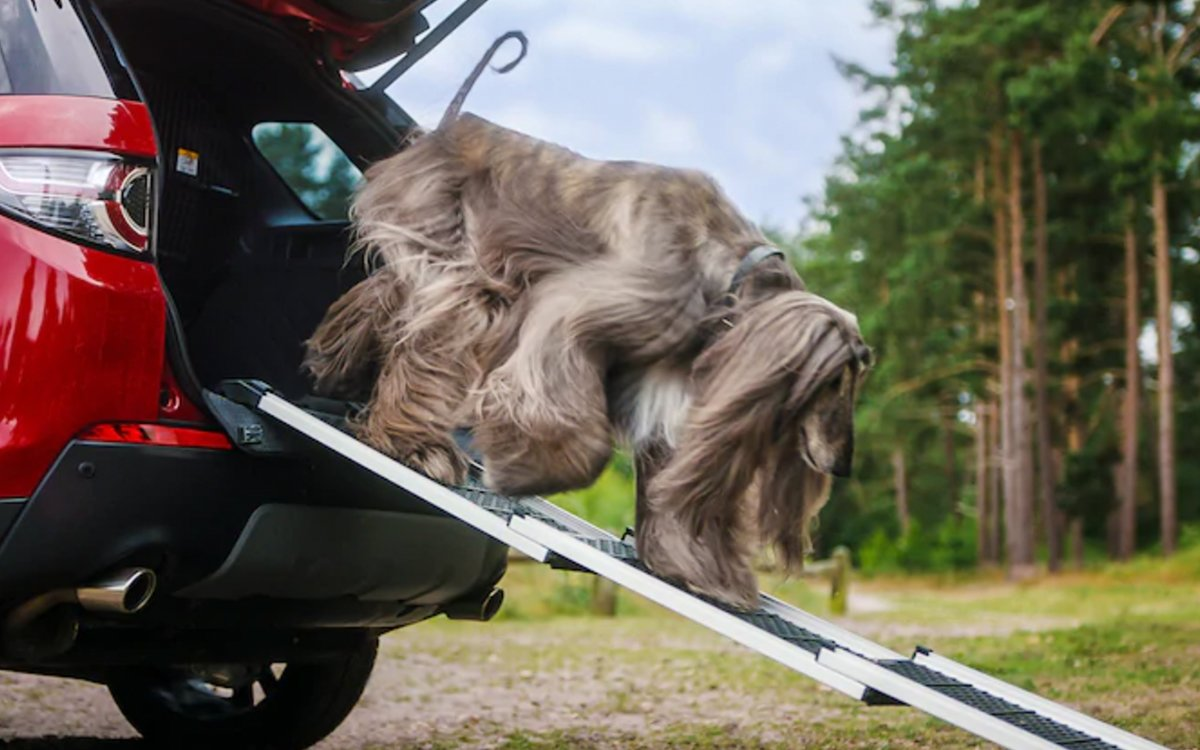 Land Rover Now Makes a Collection of Car-Friendly Dog Gear
