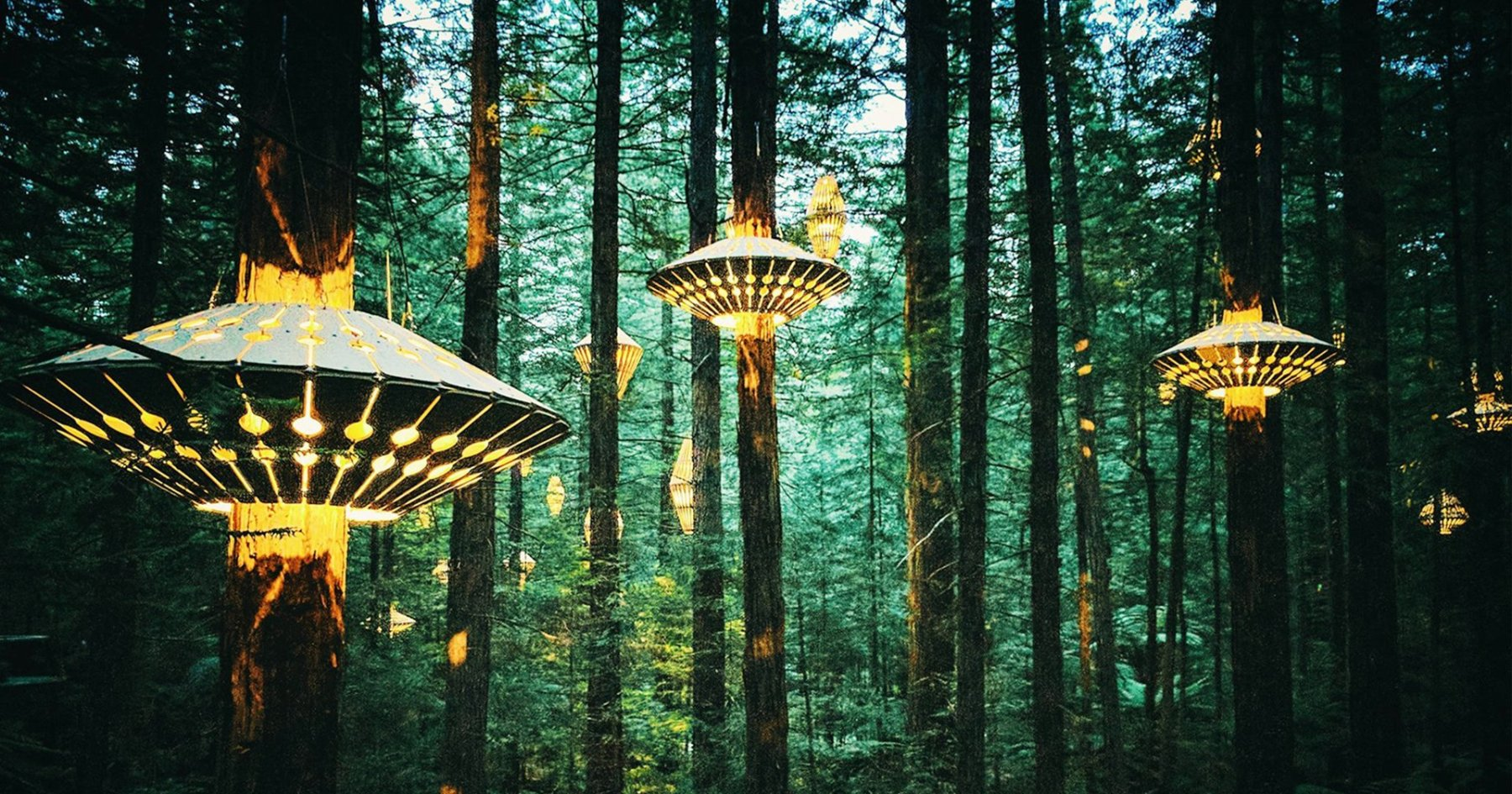The World's 12 Most Interesting Nocturnal Vacations