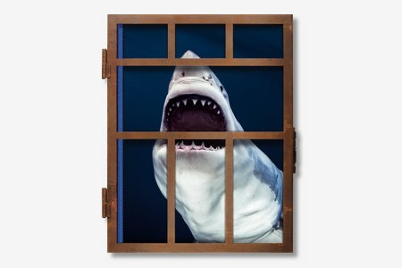 You're Gonna Need a Bigger Coffee Table for This XXL Shark Book