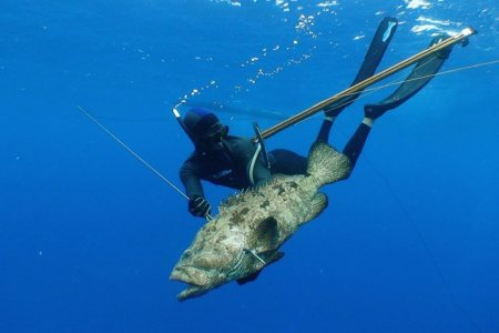 Wanna Hunt Giant Fish With a Speargun? Well Duh.