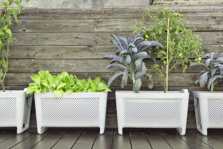 Grow Duo Smart Planter Says Eat Your Veggies or No Dessert