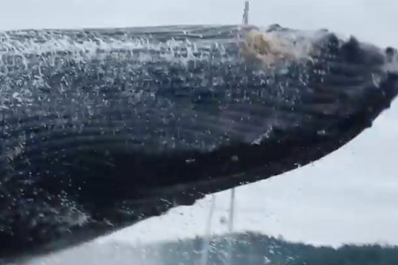 Whale-Watching Kayakers Get More Than They Bargained For