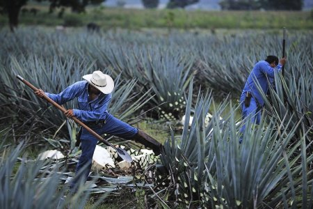 The Tequila Shortage Is Coming. Prepare Yourself.