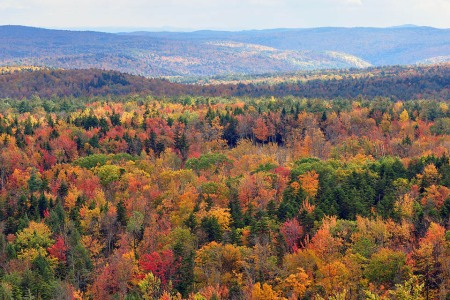 Fall Foliage Is Going to Be Particularly Vibrant This Year, Fellow Harvest Lovers
