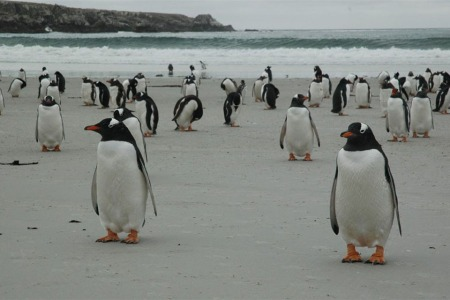 The Third Largest Falkland Island Is for Sale. Hope You Like Penguins.