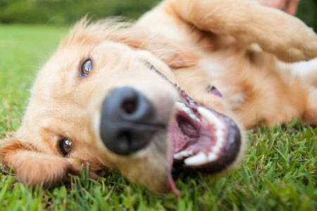 Seven Exceptionally Excessive Ways to Spoil Fido on Pet Day