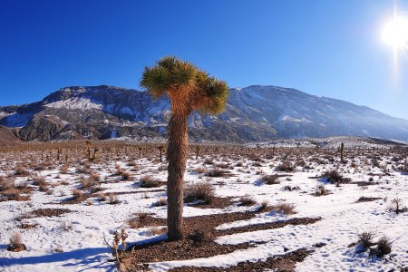 A Guide to the US' Best Winter Hikes
