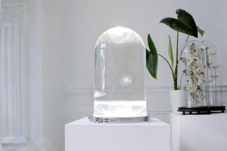 Jellyfish Aquarium Is the New Lava Lamp