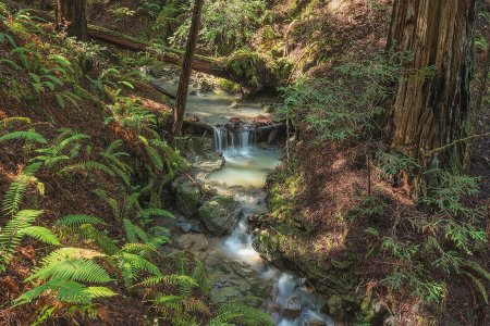 A Mythic Redwood Forest North of San Francisco Is Opening to the Public