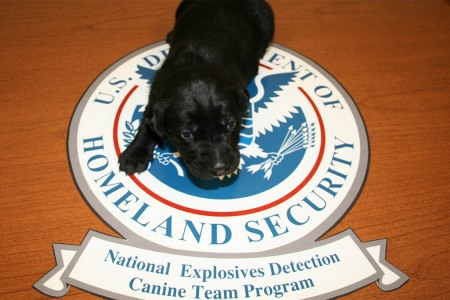 Yes, You Can Adopt One of the TSA's Failed Dog Recruits