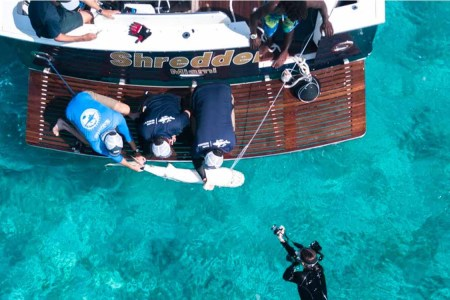 This Exumas Resort Will Bring You on a Shark Tagging Expedition