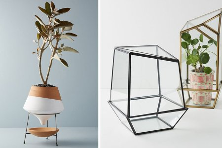 Hey Plant Dads, the Pots You've Been Looking for Are 40% Off
