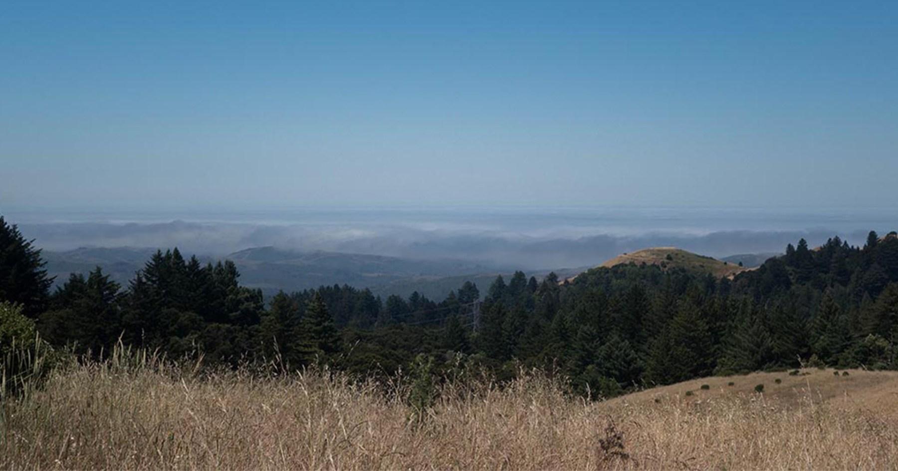 Date Hike: La Honda Creek Preserve