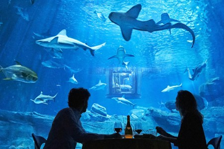 Underwater Hotel Room Will Have You Sleeping With the Sharks