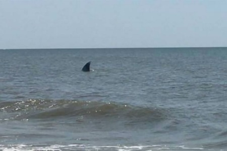 People Are Going Crazy Over This Massive Would-Be Shark Off the Carolina Coast