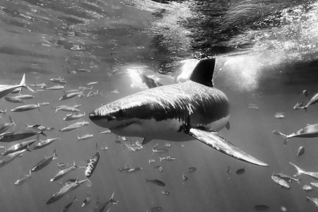 How YOU Can Help Save Florida Sharks From the Nefarious Fin Trade