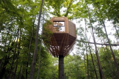 It's a Bird Nest for Humans, and You Can Rent It