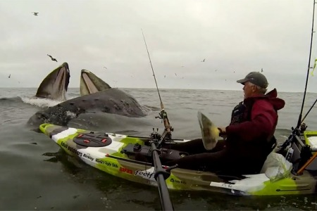 Here, Watch These Angel Whales Greet a Kayaker