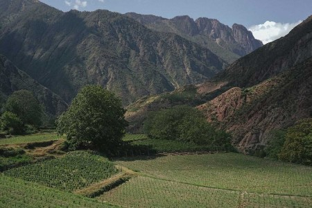 This Exceptional $300 Wine is Produced in the Foothills of the Himalayas