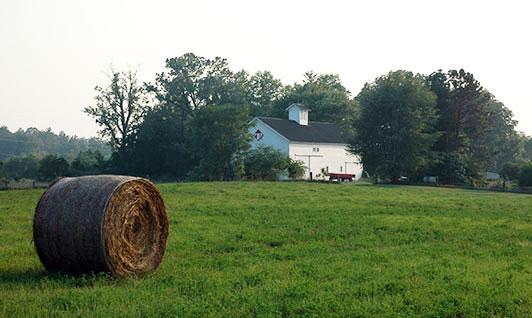 Tryon Farm
