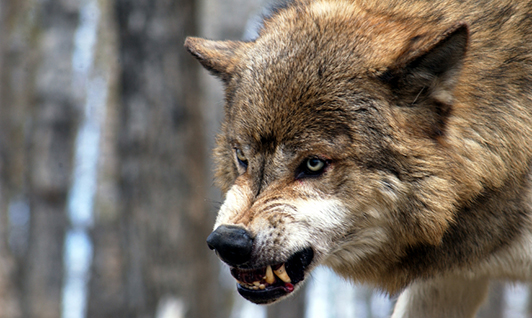 Wolvesmouth Craig Thornton