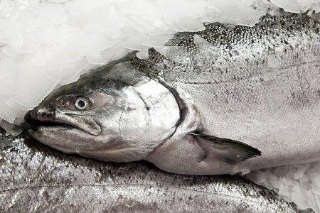 Iliamna Fish Co.