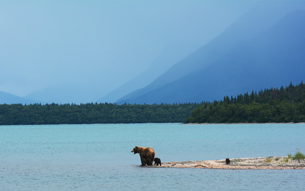 Hanging Out With Bears in Alaska Now Easier, Safer Than Ever