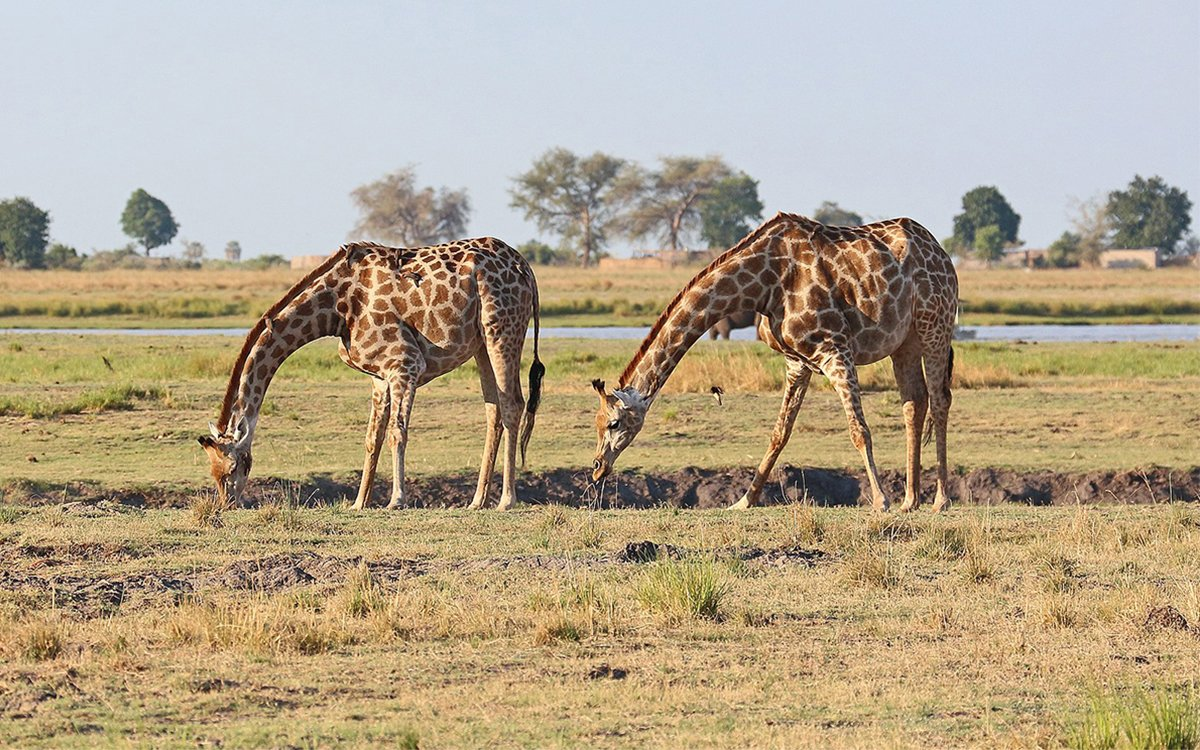 The Best Kind of Luxury Safari Is a Buy-One-Get-One-Free Safari