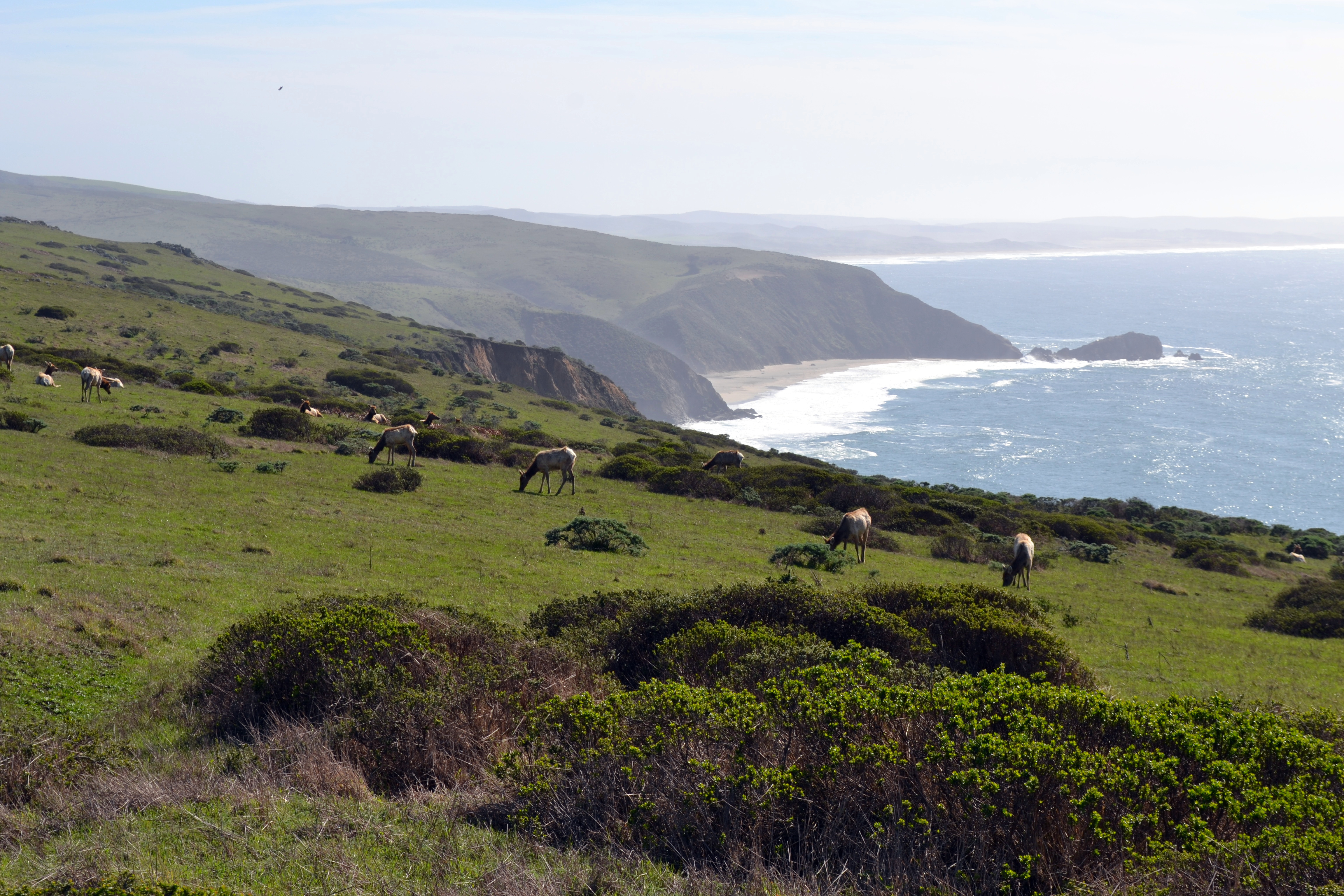 Best California National Park Hikes tomales point