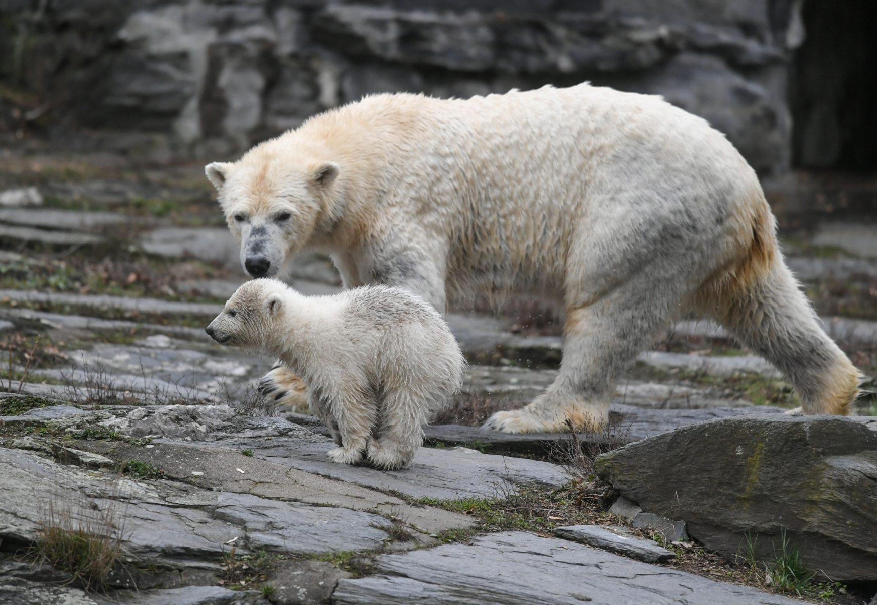 Humans are killing polar bears