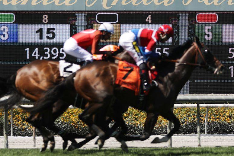 Horses at Santa Anita Park