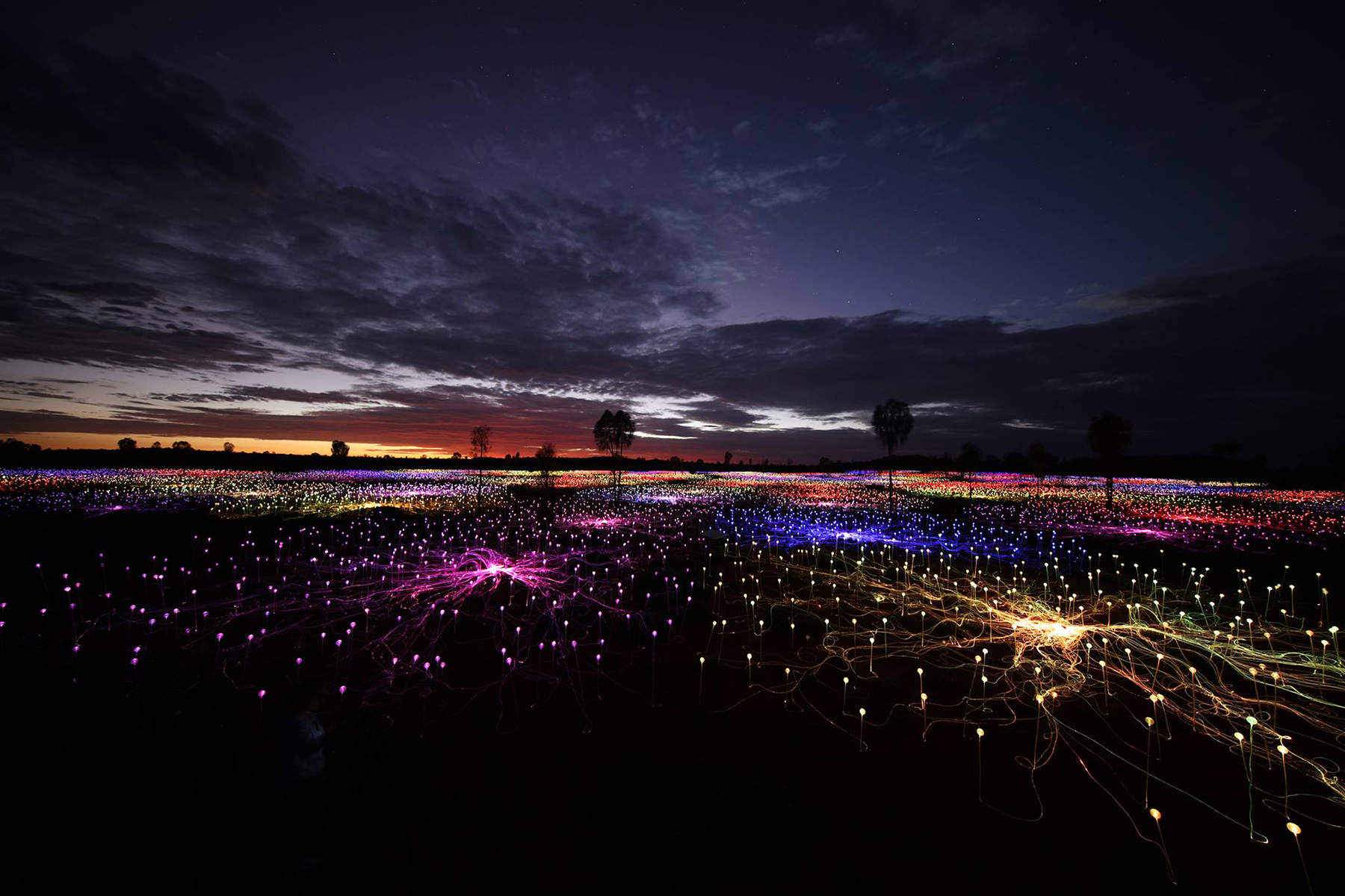 Bruce Munro Field of Light Paso Robles
