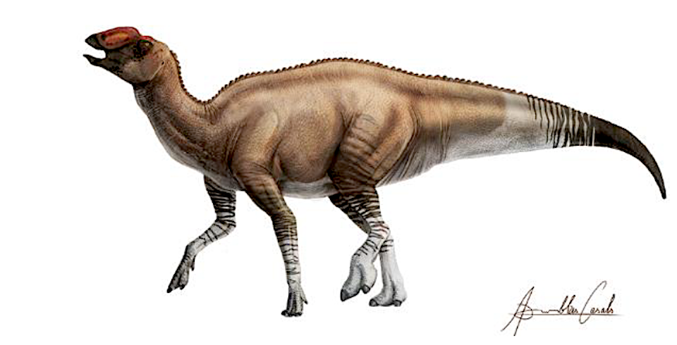 New Dinosaur Species Discovered at Texas National Park