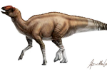 A recently discovered species of dinosaur has given scientists new insights as to how the creatures evolved millions of years ago. (Credit: ICRA Art)