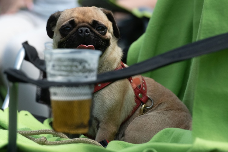 The 14 Best Dog-Friendly Bars in Chicago